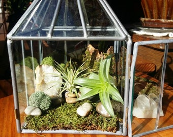 Air Plant Terrarium | Tillandsia | Woodland Decor | Crystal Geode | Square Glass Terrarium | Air Plant Gift | Airplant Gift | Greenhouse