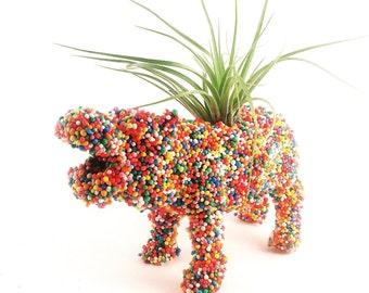 Hippopotamus planter, Hundreds and thousands animal planter, Sprinkles, hippo planter, air planter