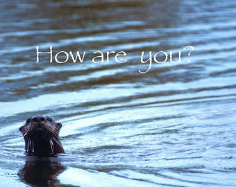 How are You? River Otter