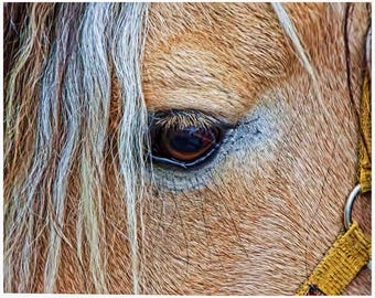 Horse Print, Horse Wall Art, horse art prints, horse  photo, horse photography, animal poster, horse home decor, horse art, horse wall decor