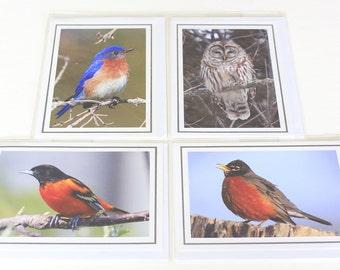 Songbirds and an Owl Photo Cards