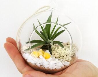Beach Garden Luftpflanze Terrarium Kit in hängen Glaskugel • Tillandsia personalisierte Geschenk anpassen Geburtstag Boho Hochzeit Übertopf