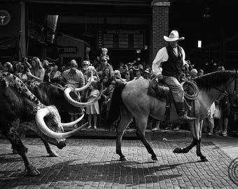 Cattle Drive - Photography, Photo, Art, Print, Cow, Steer, Texas, Dallas, Fort Worth, Black & White, Cowboy, Beef, Stockyards, Horns, Horse