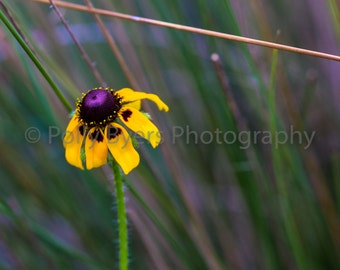 Flowers & Reeds Nature Art Photography