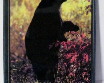 Black Bear New England Wildlife Refrigerator Magnet