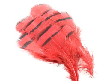 3.5 Inch Red Lady Amherst Feathers. (10) Red Feathers. Red Pheasant Feathers for Hat Bands. Red Bird Feathers for Masks. Flat Top Feathers