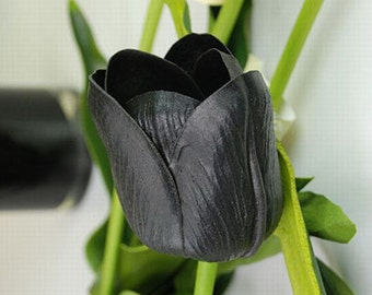 Rare Tulip Bulbs Available Black Tulips Variety Fresh Bulbous Root Flowers 10 Bulbs (Item No: 14)
