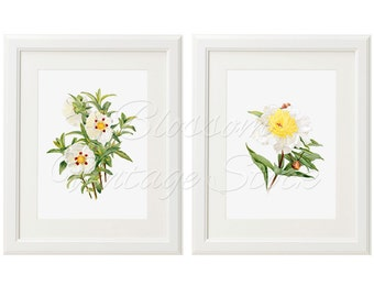 Botanical Prints White Flowers Botanical Set Printable Art INSTANT DOWNLOAD Illustrations for Print 5x7, 8x10, 11x14 Included 2042