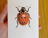 Greetings Card - Eyed Ladybird