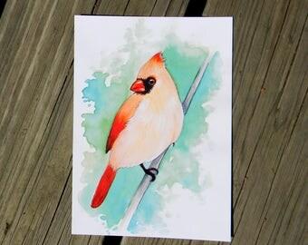 Cardinal 5 x 7  PRINT