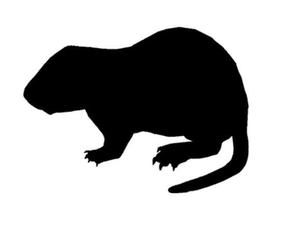 Woodchuck Groundhog Stencil Made From 4 Ply Mat Board