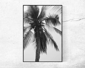 Palm Tree, digital download