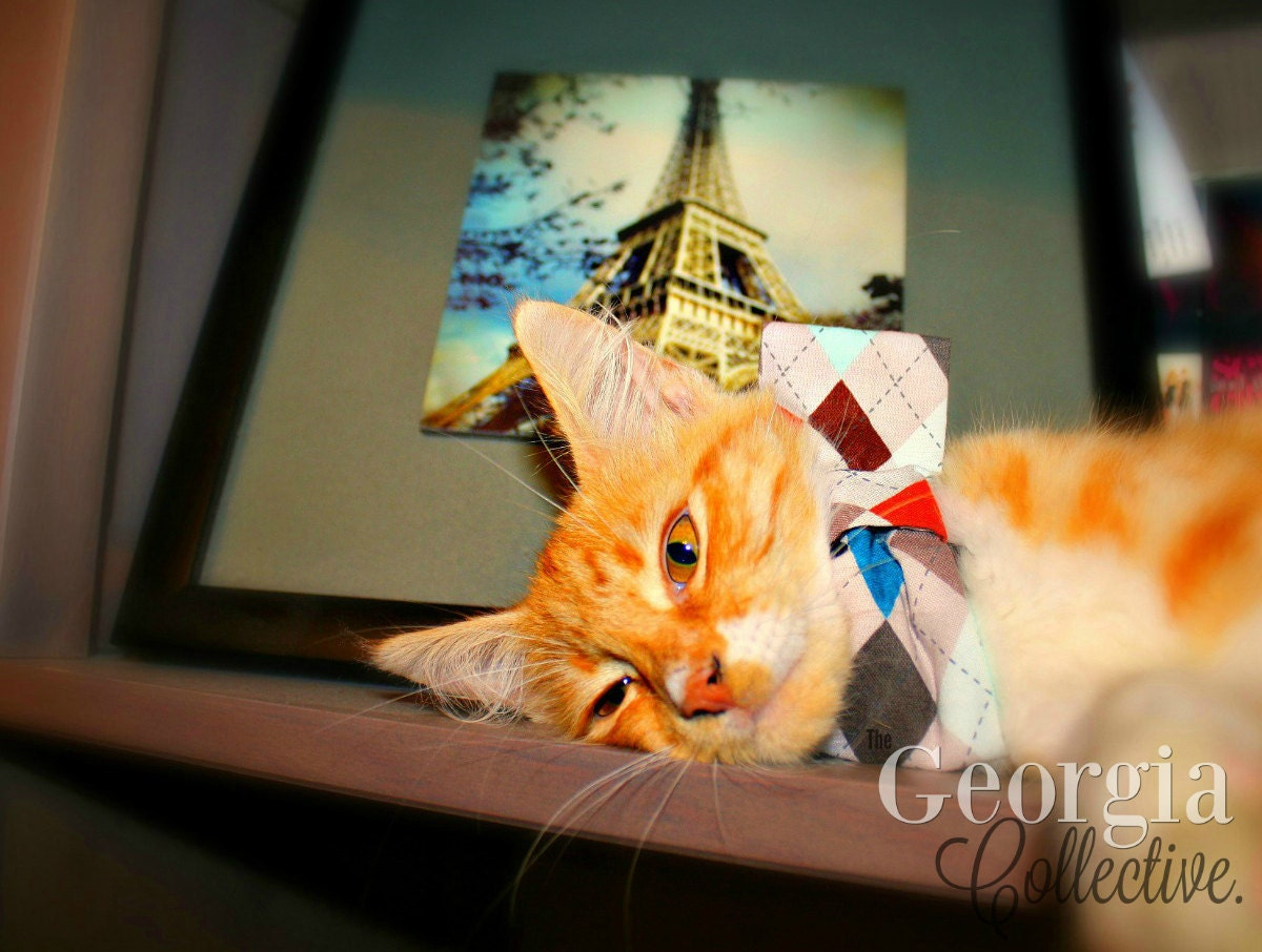 6 x 4 orange tabby paris note card greeting card cat for Paris orange card