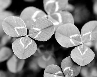 Black and White Wall Art, Clover Leaves, Botanical Print, Clover Leaf, Nature Photo Print, Clovers, Fine Art Photograph, 12X12 Square Decor