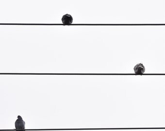 Photograph birds on wires note music 300 dpi