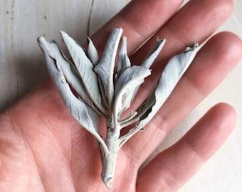 Sage Smudge - White Sage Leaves - Dried Sage - Sage Cleansing - Crystal Cleansing - Wild Harvested Sage - Sage Cluster -Metaphysical Tools
