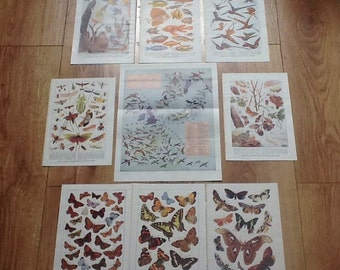 Butterfly vintage prints Encyclopeadia prints natural art nature theme butterfies moths birds insects fish humming birds
