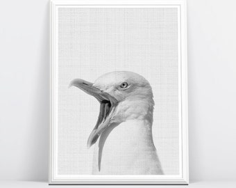 Seagull Print, SeaBird, Animal Photo Wall Art, Black and White, Printable Digital Download, Large Poster, Modern Minimalist