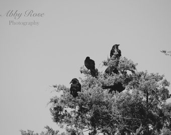 Black & White Photography, Crow Photography, Bird Photography, Nature Wall Art