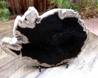 Petrified wood, petrified wood slab, polished petrified wood, fossilized wood, natural home decor, healing stone, altar stone