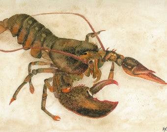 American Lobster Print