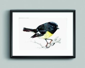 New Zealand native bird Miromiro (or Tomtit) illustrated Large print, from original watercolor and ink painting artwork, Wild life wall art