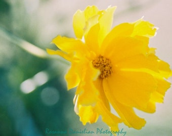 Dancing Flower: nature, yellow, film photography, unedited