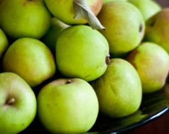 Apple Green Frangrant Oil | Phthalate Free