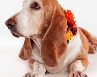 YAYA- Wedding Dog Collar, Dog Flower Crown, Floral Dog Collar, Spring Wedding, Boho Wedding, Bohemian Wedding, Dog Flower Girl, Pet Wreath