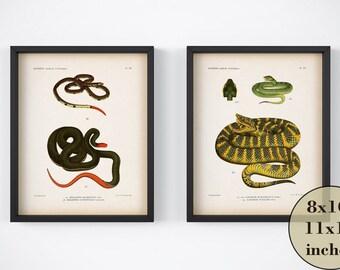 Vintage snake print set, Set of 2 snake prints, Printable art, Digital snake prints, Reptile prints, Antique animal prints, 8x10, 11x14, JPG