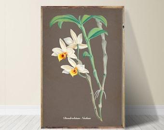 Orchid  Print Orchid Art Orchid Wall Art Vintage Art Vintage Decor