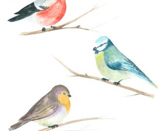 "Illustration ""Winter birds"""