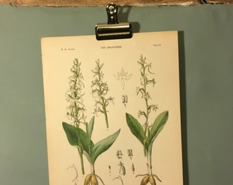 Antique Botanical Print 1921. Orchids. Hand finished lithograph. Perfect Gift