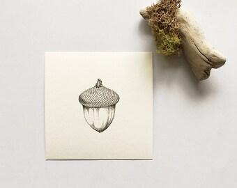 Acorn - Print