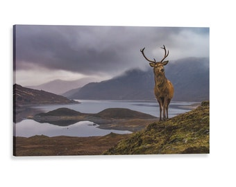 Stag canvas wrap, Wildlife of Scotland,  Scottish highlands, fine art photography, landscape, wall art