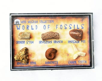 6 Fossil Gift Box Collection