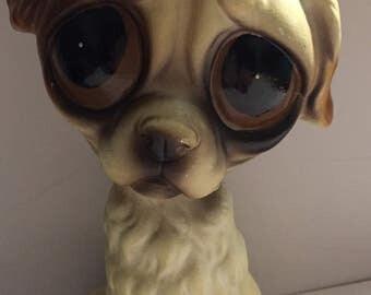 Big eyed dog