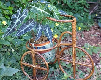 Bicycle plant stand, bike plant stand, vintage plant stand
