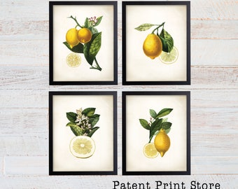 Lemon Botanical Art Prints. Lemon Prints. Flower Wall Art. Botanical Print. Kitchen Art Prints. Dining. Botanical Wall Art. Farmhouse. 224