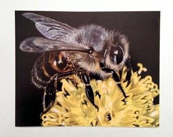 Bee Art Print -  Wildlife Art