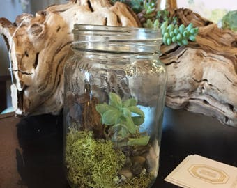 Jar Succulent Terrarium DIY Kit