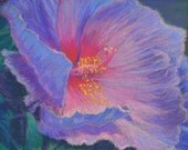 HIBISCUS FLOWER Close-up Original 8.5 x 11 Pastel Painting by Sharon Weiss
