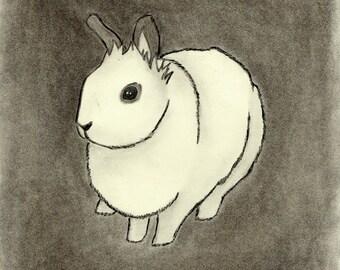 White Rabbit Charcoal Drawing, Giclee Print 8x10, Rabbit Art, Wall Art