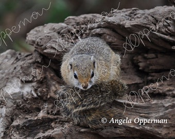 Cozy Squirrel // Photography // Wildlife // Instant Download