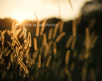 Nature Photography, Weeds at Sunset, Rustic Home Decor