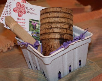 Lavender Bouquet Seed Kit - Six  mini lavender packets with 10 seeds each