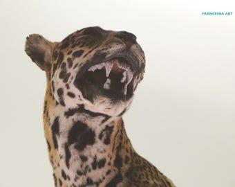 """Photo """"Leopard"""", digital, photography, animals, wild animals, tiger, geopard"""