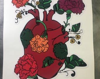 Afray Large Anatomical Carnation Heart