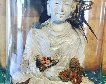 Real butterfly taxidermy Buddha