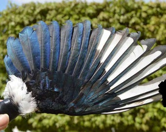 Smudge Fan (Magpie Crow Wing no Beads)